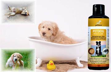 meilleur shampooing pour chien