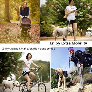 meilleure laisse main-libres pour chien