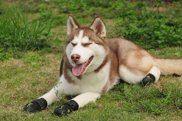 meilleures bottes pour chien