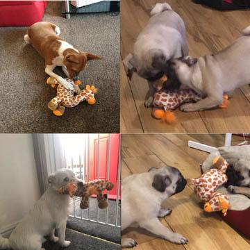 meilleur jouet couineur pour chiens