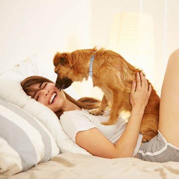 meilleur collier anti-puces pour chien