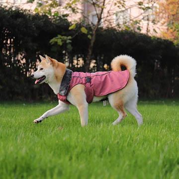meilleur vêtement pour chien