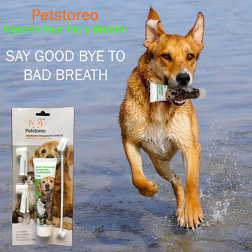 meilleur dentifrice pour chien