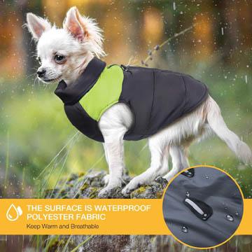 meilleur manteau pour chien