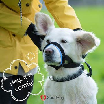 prévention contre les morsures de chien